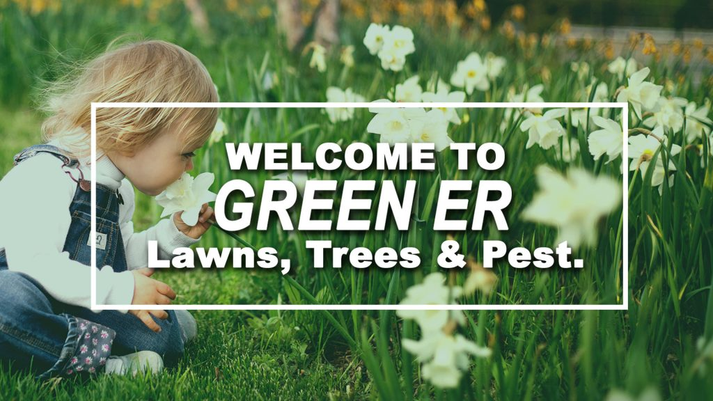 GreenER Lawns, Trees & Pest